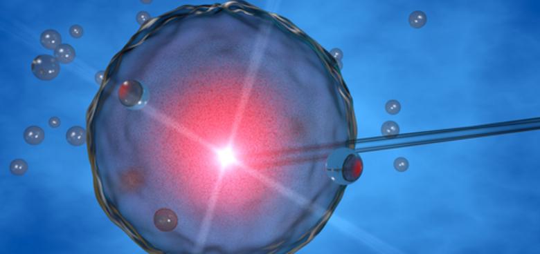Jak se darují vajíčka a spermie
