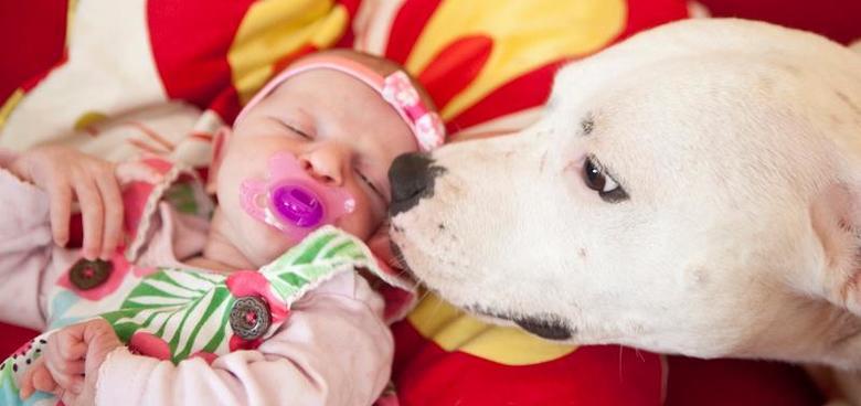 Pes a dítě, jde to k sobě?