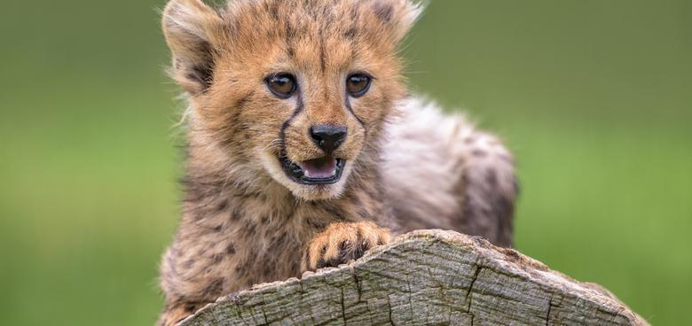 Gepardí paterčata přejí všem školákům šťastný začátek nového školního roku!
