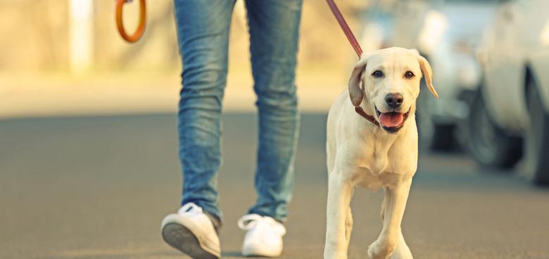 Neumíme chodit. Místo zdraví prospěšné chůze si způsobujeme bolest