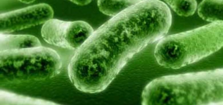 Chlamydiové infekce v těhotenství