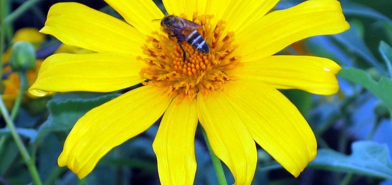 Alergie na bodnutí hmyzem může ohrozit život