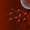 Oplození mimo tělo ženy - IVF