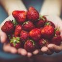 Jahody obsahují více vitaminu C než pomeranč. Jsou ale opravdu zdravé?