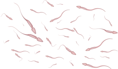 Spermie – nezbytná půlka nového života