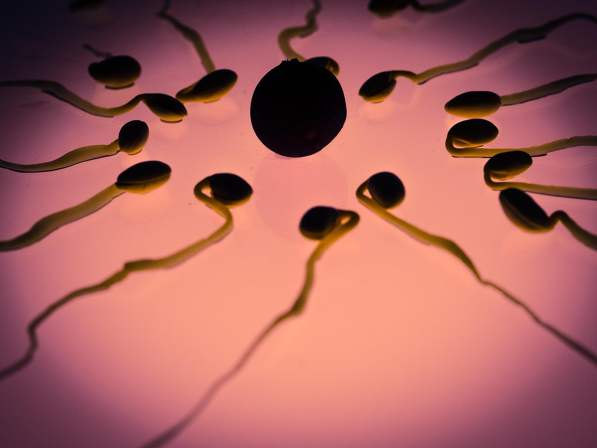 Víte, co nastartuje líné spermie k životu?