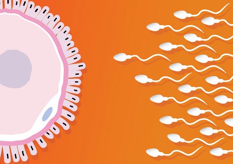Překonané mýty ve světě mužské plodnosti?  Počet spermií neklesá, a spermie nepřicházejí o svůj ocásek