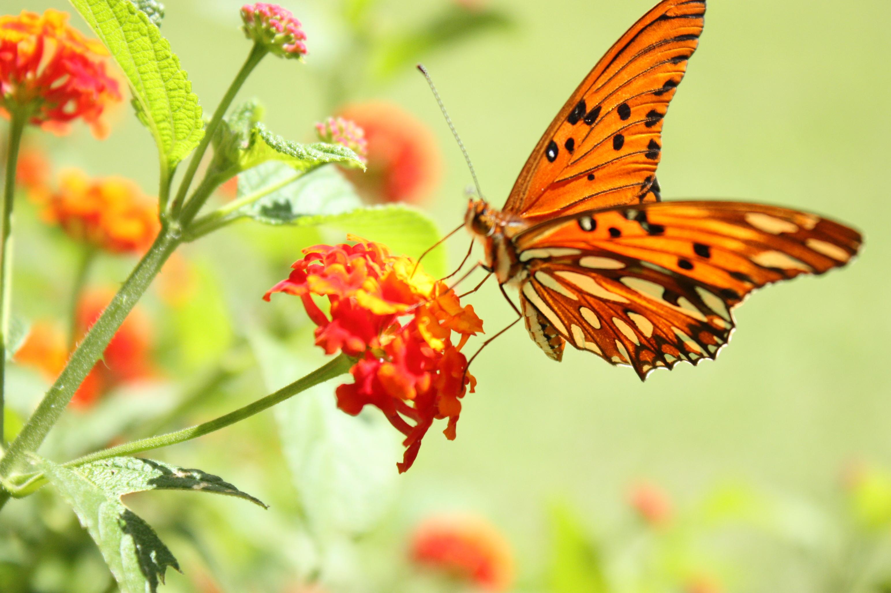 Když se nemoc motýlích křídel jednou objeví v rodině